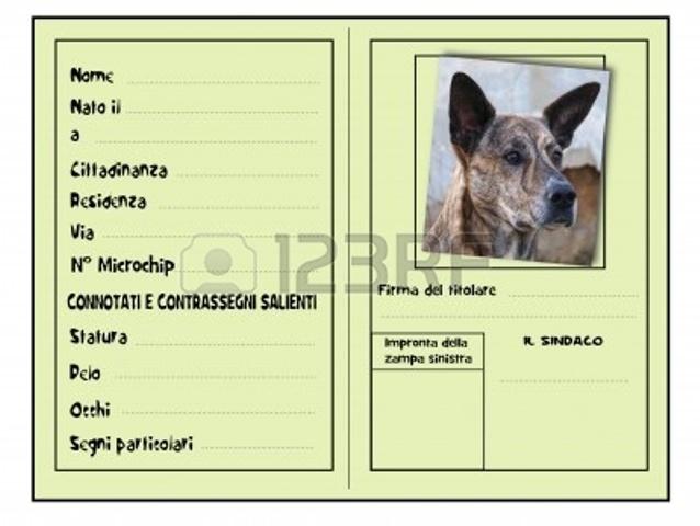 Avezzano multata la proprietaria di un cane senza i - Colorazione immagine di un cane ...