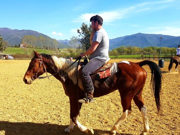 luciani horses 11