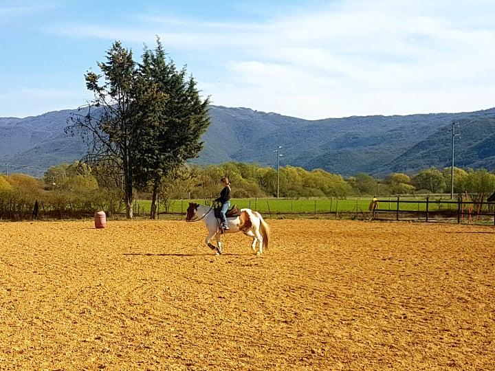 luciani horses 3