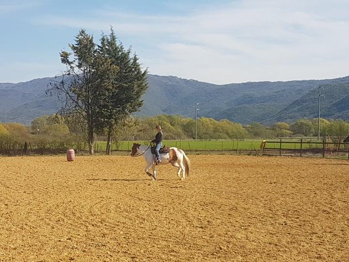 luciani horses 6
